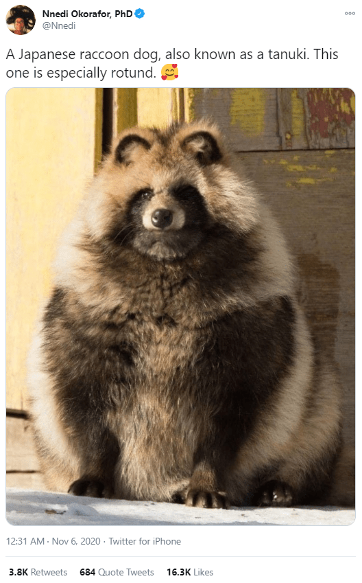 Mammal - Nnedi Okorafor, PhD 000 @Nnedi A Japanese raccoon dog, also known as a tanuki. This one is especially rotund. 12:31 AM - Nov 6, 2020 · Twitter for iPhone 3.8K Retweets 684 Quote Tweets 16.3K Likes