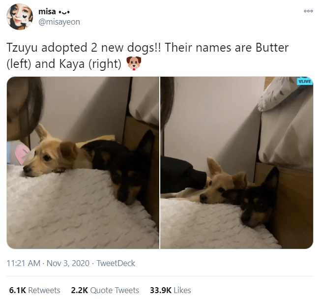 Pembroke welsh corgi - misa •.. 000 @misayeon Tzuyu adopted 2 new dogs!! Their names are Butter (left) and Kaya (right) VLIVE 11:21 AM - Nov 3, 2020 · TweetDeck 6.1K Retweets 2.2K Quote Tweets 33.9K Likes