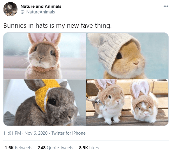 Rabbit - Nature and Animals 000 @_NatureAnimals Bunnies in hats is my new fave thing. 11:01 PM - Nov 6, 2020 · Twitter for iPhone 1.6K Retweets 248 Quote Tweets 8.9K Likes