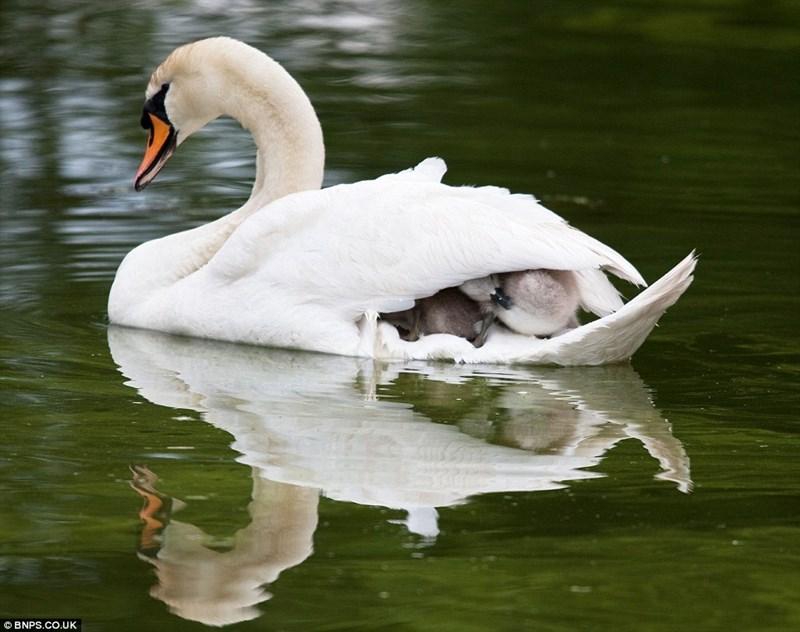 Bird - © BNPS.CO.UK