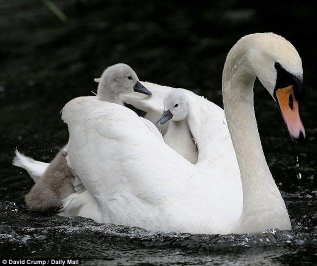 Bird - O David Crump / Daily Mail