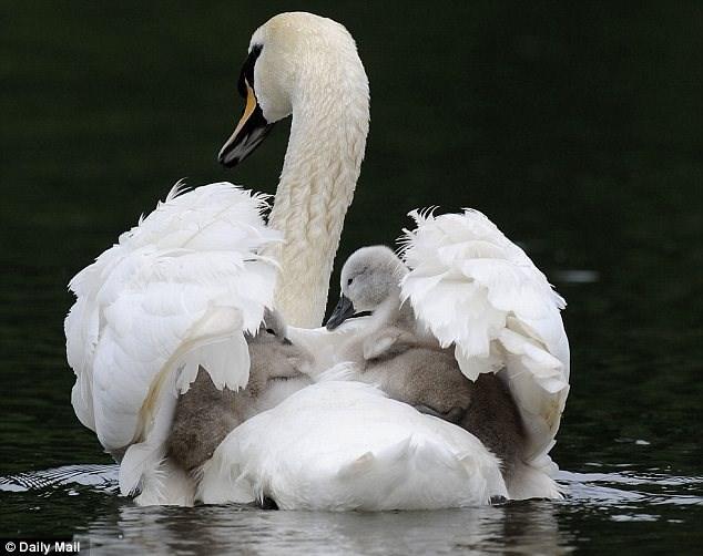 Bird - © Daily Mail