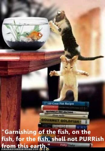 Garnishing of the fish, on the fish, for the fish. shall not PURRish from earth | cat pun two kittens standing on top of each other to reach a goldfish in a bowl