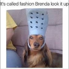 Canidae - t's called fashion Brenda look it up