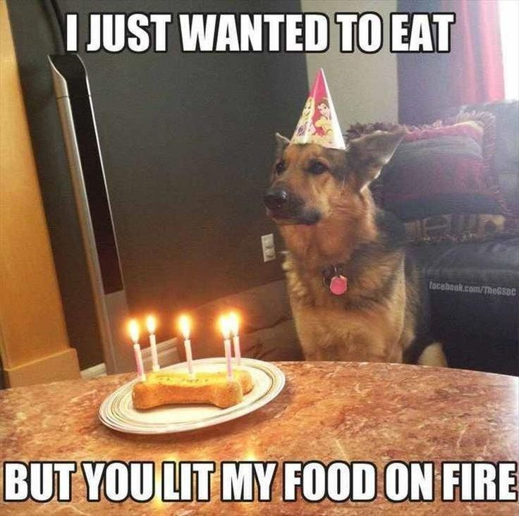 German shepherd dog - I JUST WANTED TO EAT facebook.com/The6soe BUT YOU LIT MY FOOD ON FIRE