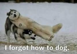 Mammal - I forgot how to dog.
