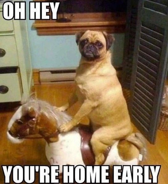 Dog - ОН НЕY YOU'RE HOME EARLY