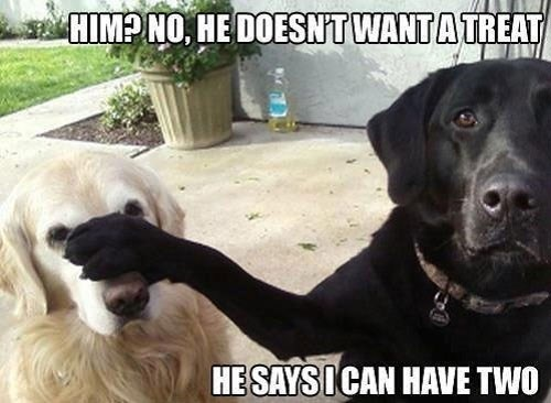 Dog breed - HIMP NO, HE DOESNT WANTATREAT HE SAYSI CAN HAVE TWO