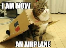 Cat - TAM NOW AN AIRPLANE