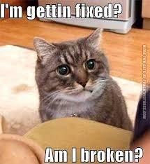 Cat - I'm gettin fixed? Am I broken?