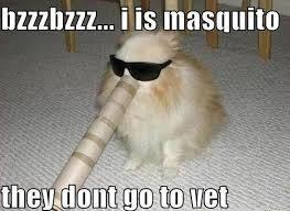 Photo caption - bzzzbzzz. i is masquito they dont go to vet