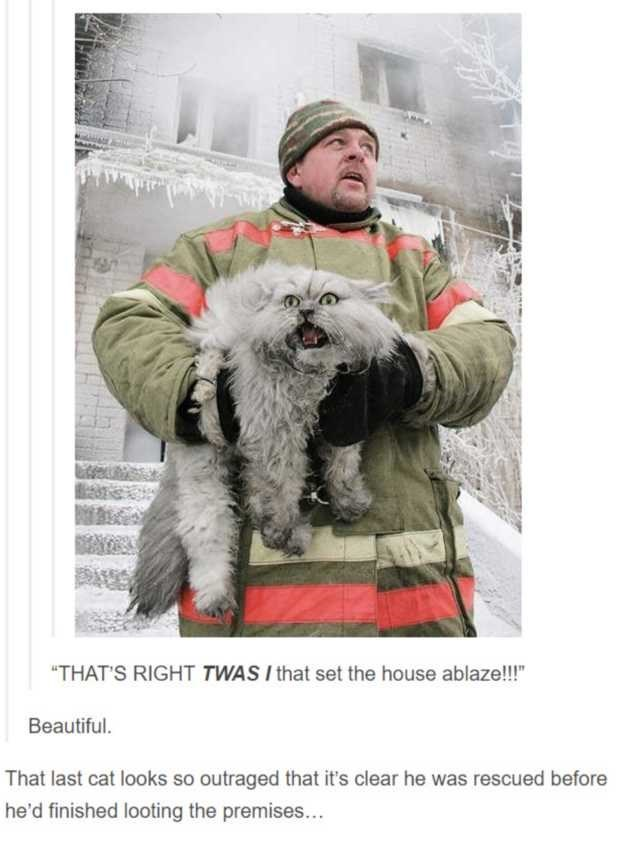 """Dog - """"THAT'S RIGHT TWAS I that set the house ablaze!!!"""" Beautiful. That last cat looks so outraged that it's clear he was rescued before he'd finished looting the premises..."""