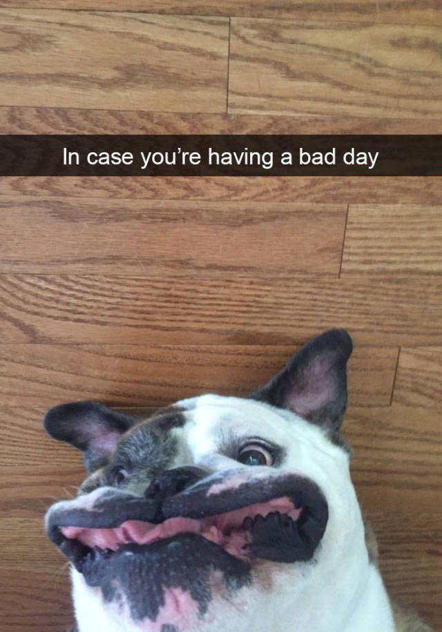 Canidae - In case you're having a bad day