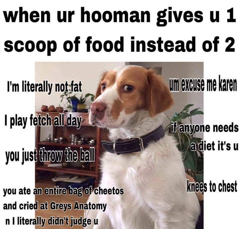 Dog - when ur hooman gives u 1 scoop of food instead of 2 I'm literally not fat um excuse me karen I play fetch all day ifanyone needs a diet it's u you just Ehrow the hll knees to chest you ate an entire bag of cheetos and cried at Greys Anatomy nI literally didn't judge u