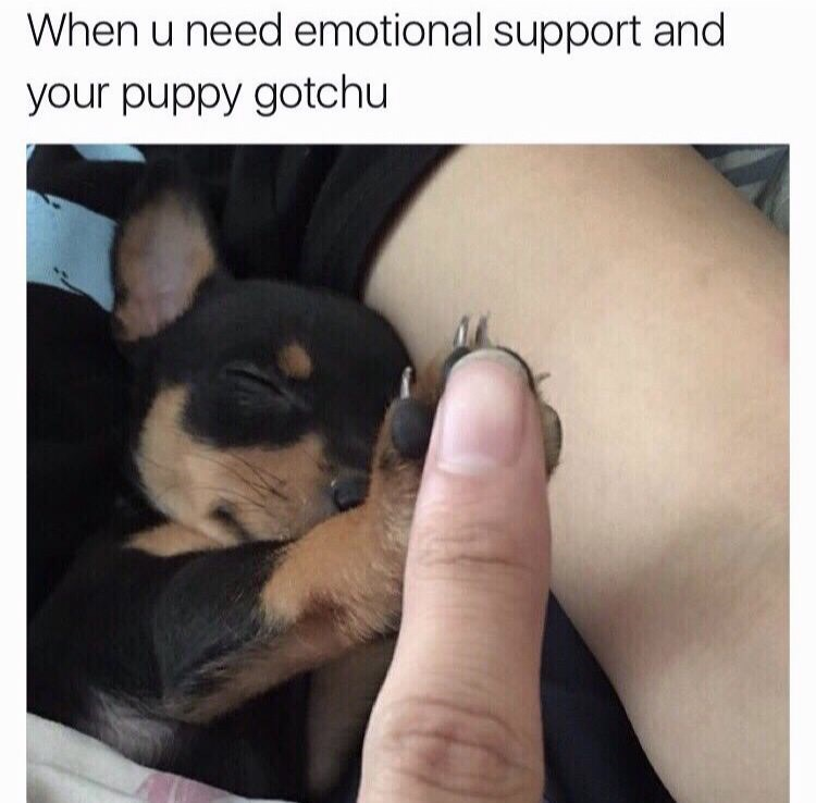 Canidae - When u need emotional support and your puppy gotchu