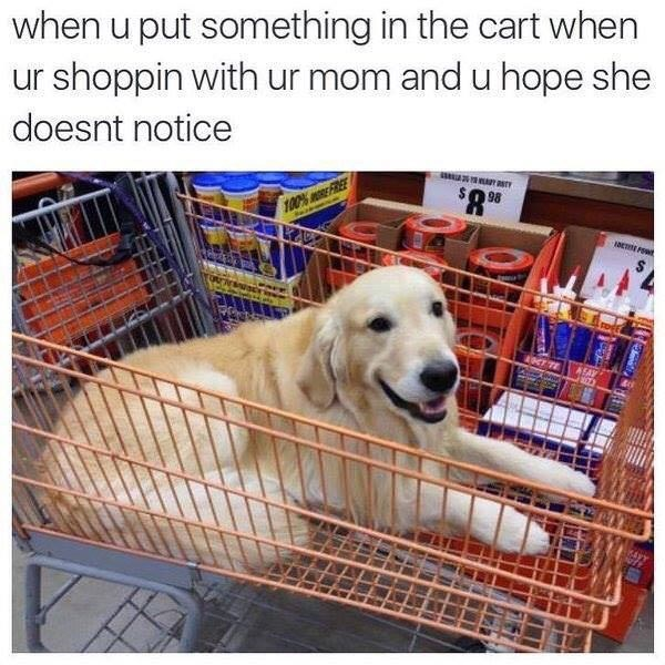 Dog - when u put something in the cart when ur shoppin with ur mom and u hope she doesnt notice 100% RE FREE 4NT TE AEAY