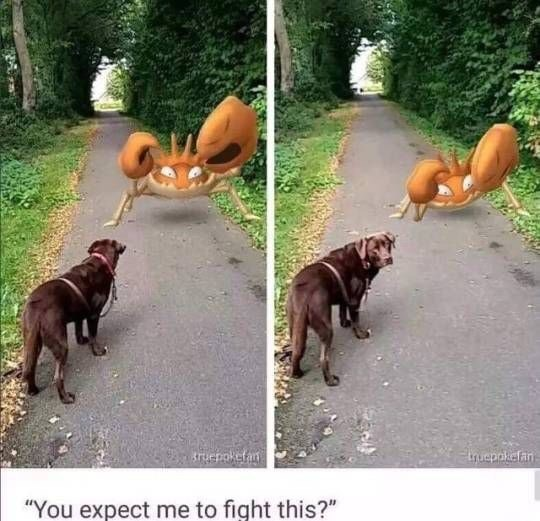 """Dog - Etuepokefan """"You expect me to fight this?"""""""