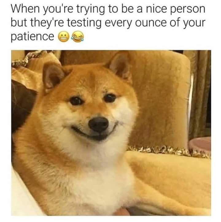 Dog - When you're trying to be a nice person but they're testing every ounce of your patience e