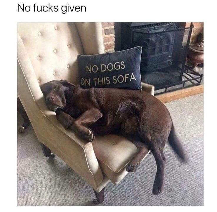 Canidae - No fucks given NO DOGS ON THIS SOFA