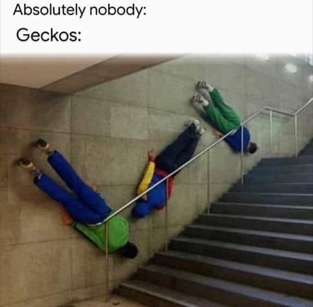 funny memes, stupid memes, dank memes, geckos, animals | people climbing on walls on their bellies like lizards