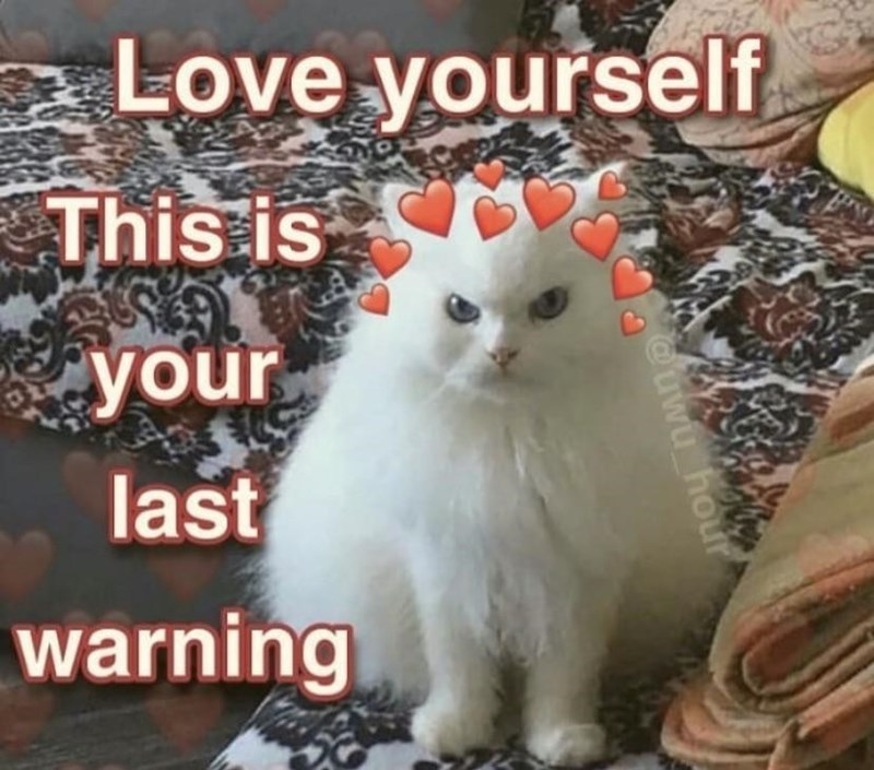 Cat - Love yourself This is your last warning @uwu hour