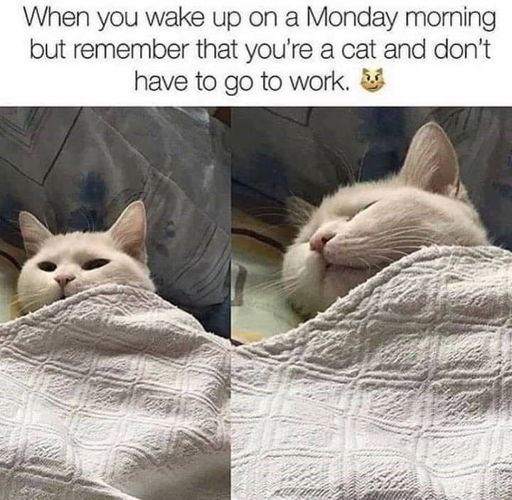 Cat - When you wake up on a Monday morning but remember that you're a cat and don't have to go to work.