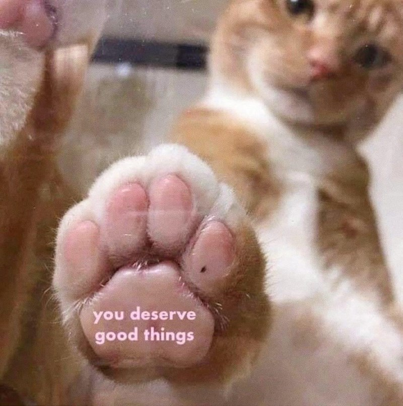 Cat - you deserve good things
