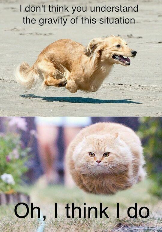 Canidae - I don't think you understand the gravity of this situation Oh, I think I do