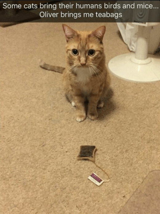 Cat - Some cats bring their humans birds and mice... Oliver brings me teabags
