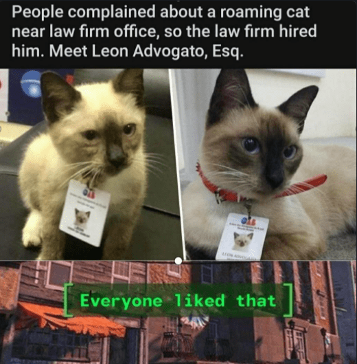Cat - People complained about a roaming cat near law firm office, so the law firm hired him. Meet Leon Advogato, Esq. ON A Everyone liked that