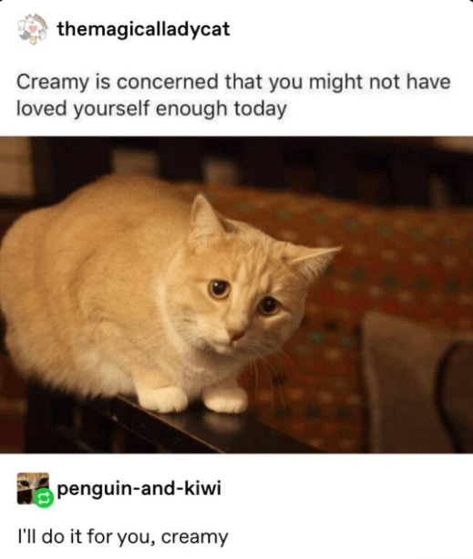 Cat - themagicalladycat Creamy is concerned that you might not have loved yourself enough today penguin-and-kiwi I'll do it for you, creamy