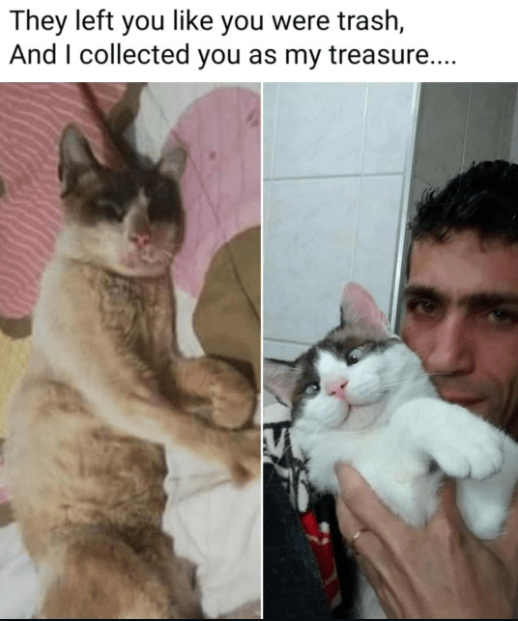 Cat - They left you like you were trash, And I collected you as my treasure..
