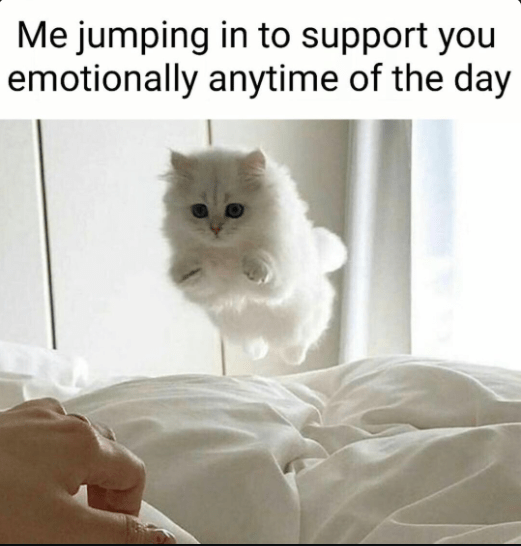 Cat - Me jumping in to support you emotionally anytime of the day
