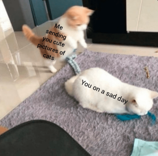 Cat - Me sending you cute pictures of cats You on a sad day