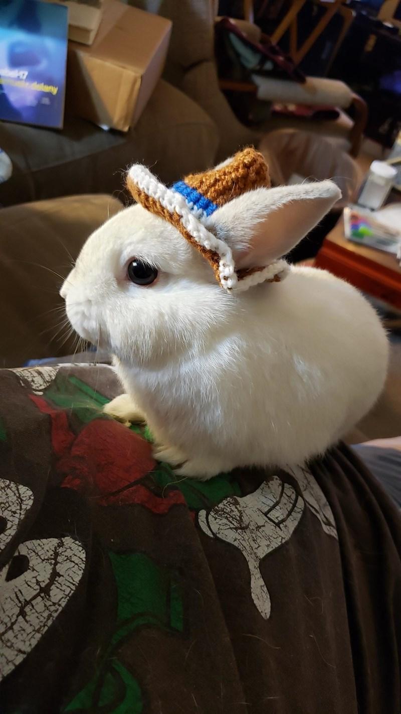 Rabbits and Hares - delany