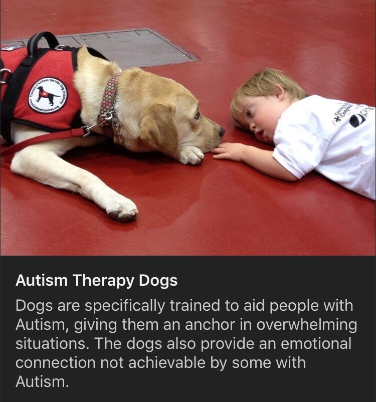 Photo caption - (Conpr Autism Therapy Dogs Dogs are specifically trained to aid people with Autism, giving them an anchor in overwhelming situations. The dogs also provide an emotional connection not achievable by some with Autism.