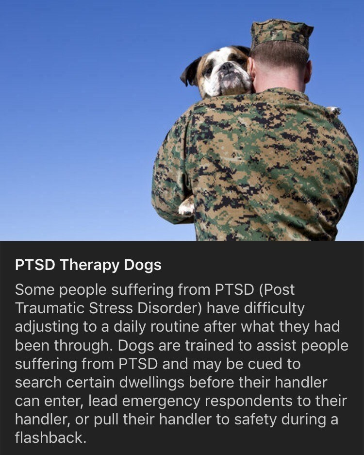 Military camouflage - PTSD Therapy Dogs Some people suffering from PTSD (Post Traumatic Stress Disorder) have difficulty adjusting to a daily routine after what they had been through. Dogs are trained to assist people suffering from PTSD and may be cued to search certain dwellings before their handler can enter, lead emergency respondents to their handler, or pull their handler to safety during a flashback.