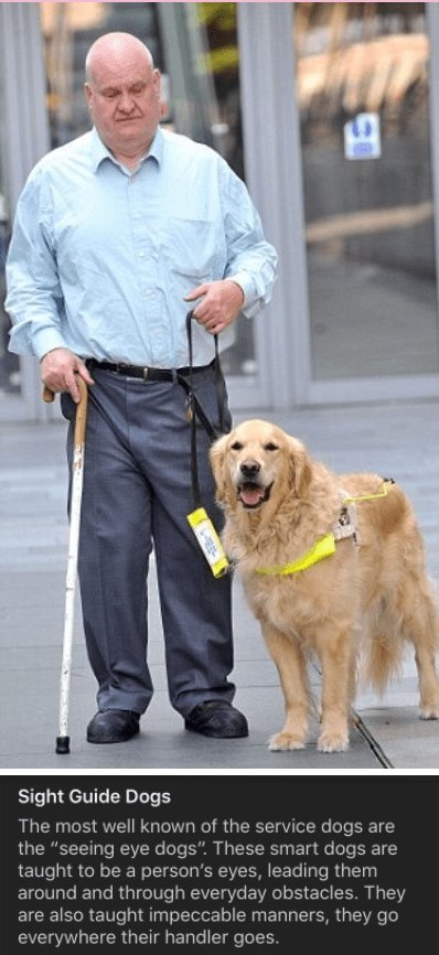 """Dog - Sight Guide Dogs The most well known of the service dogs are the """"seeing eye dogs"""". These smart dogs are taught to be a person's eyes, leading them around and through everyday obstacles. They are also taught impeccable manners, they go everywhere their handler goes."""