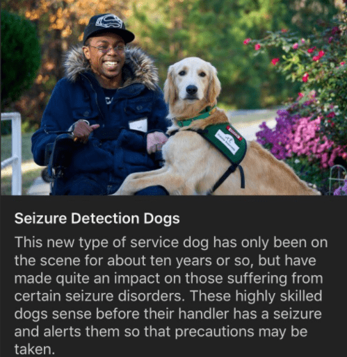 Dog - Seizure Detection Dogs This new type of service dog has only been on the scene for about ten years or so, but have made quite an impact on those suffering from certain seizure disorders. These highly skilled dogs sense before their handler has a seizure and alerts them so that precautions may be taken.