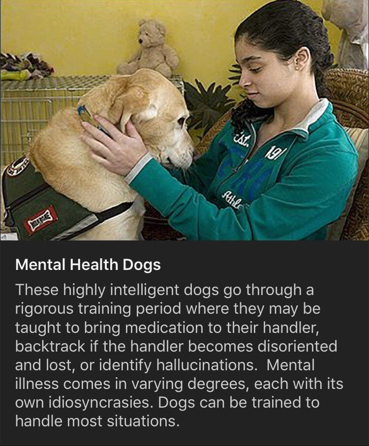 Veterinarian - . 19/ Athle Mental Health Dogs These highly intelligent dogs go through a rigorous training period where they may be taught to bring medication to their handler, backtrack if the handler becomes disoriented and lost, or identify hallucinations. Mental illness comes in varying degrees, each with its own idiosyncrasies. Dogs can be trained to handle most situations.