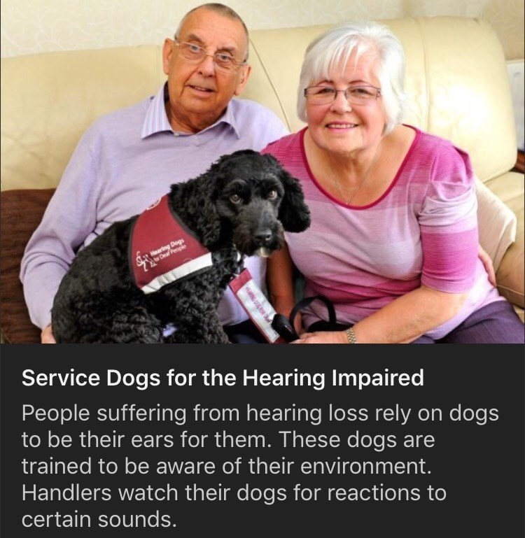 Dog breed - Hearing Dogs Deal People Service Dogs for the Hearing Impaired People suffering from hearing loss rely on dogs to be their ears for them. These dogs are trained to be aware of their environment. Handlers watch their dogs for reactions to certain sounds.