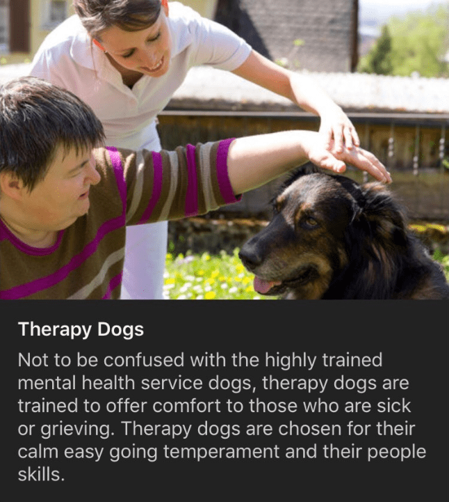 Dog breed - Facial expression - Therapy Dogs Not to be confused with the highly trained mental health service dogs, therapy dogs are trained to offer comfort to those who are sick or grieving. Therapy dogs are chosen for their calm easy going temperament and their people skills.