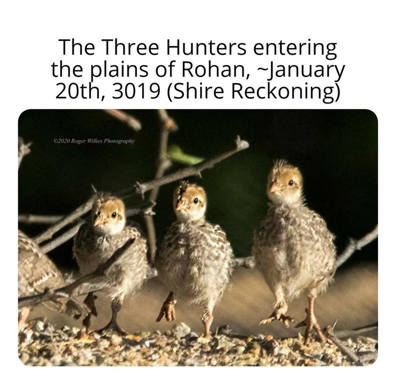 Bird - The Three Hunters entering the plains of Rohan, -January 20th, 3019 (Shire Reckoning) 02020 Roger Wilkes Photography