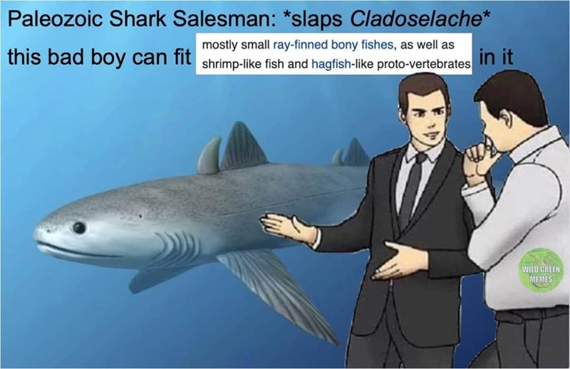 Fish - Paleozoic Shark Salesman: *slaps Cladoselache* mostly small ray-finned bony fishes, as well as this bad boy can fit shrimp-like fish and hagfish-like proto-vertebrates in it WILD GREEN MEMES
