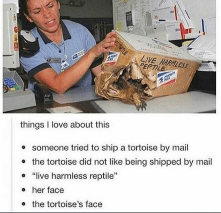 "Job - LIVE HARMLESS PEPTILE things I love about this • someone tried to ship a tortoise by mail • the tortoise did not like being shipped by mail • ""live harmless reptile"" • her face • the tortoise's face ETATLE"