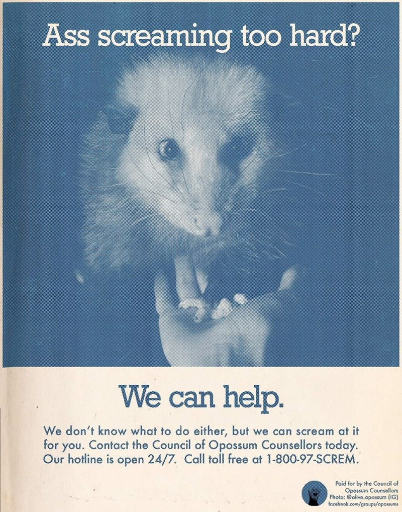 Text - Ass screaming too hard? We can help. We don't know what to do either, but we can scream at it for you. Contact the Council of Opossum Counsellors today. Our hotline is open 24/7. Call toll free at 1-800-97-SCREM. Paid for by the Council of Opossum Counsellors Photo: Golive.opossum (IG) foosbnok.com/groups/opossums
