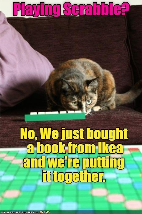 Cat - Playing Serabble? No, We just bought a book from Ikear and we're putting it together. ICANHASC HEEZE UR GER.COM E