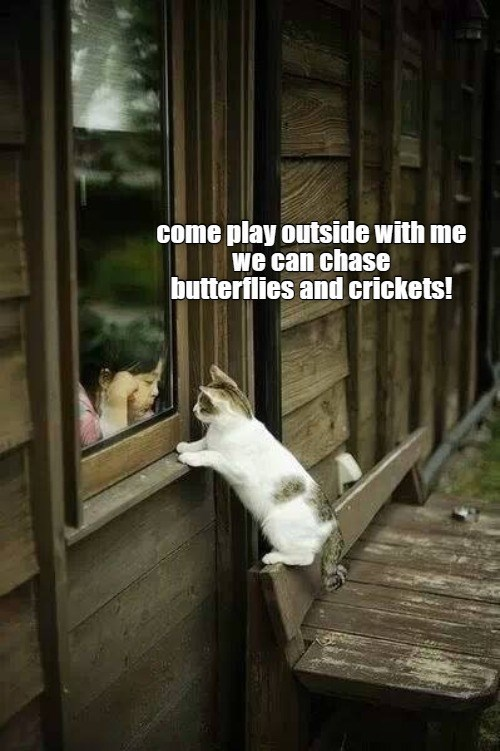 Adaptation - come play outside with me we can chase butterflies and crickets!