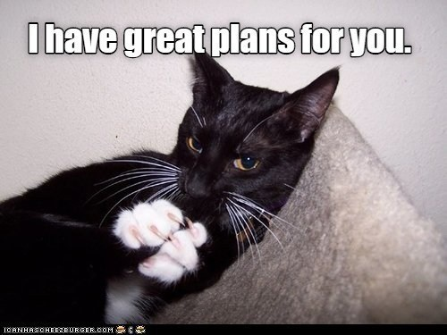 Cat - Ihave great plans for you. ICANHASCHEEZE URGER.COM