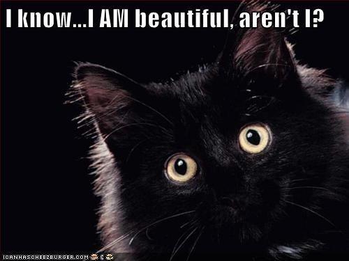 Cat - I know...I AM beautiful, aren't I? ICANHASCHEEZEURGER.COM